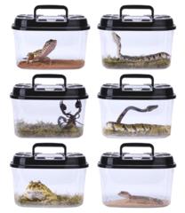 Reptiel bakken