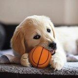 bal hond
