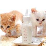 flesje met speen kitten
