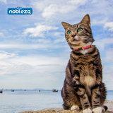 Katten Halsband met belletje 3D_